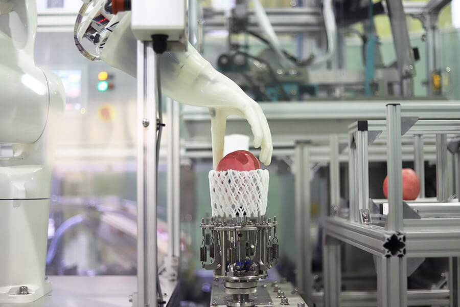 スキューズ株式会社さまにて、モモシンクイガ被害果検査システムに連結するモモ自動箱詰め装置の写真、動画撮影を行いました