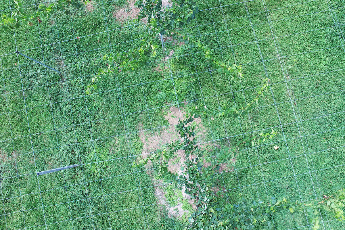 【ぶどうの栽培効率化の研究②】夏、ぶどう枝の3D点群データとAIの活用へ